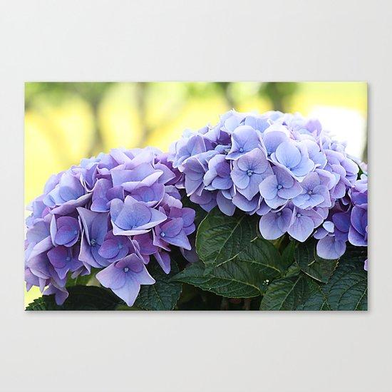 Purple hydrangea(1). Canvas Print