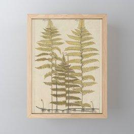 Vintage Fern Botanical Framed Mini Art Print