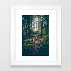 Rainforest Path Framed Art Print