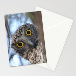Australian Powerful Owl Stationery Cards