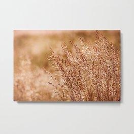 Clump of grass inflorescence sepia toned Metal Print