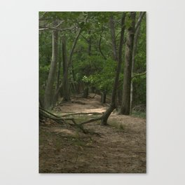 Up North Forest Path Canvas Print