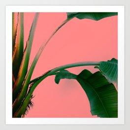 Palmé Rosé Art Print