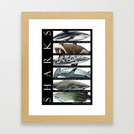 Sharks of the World Framed Art Print