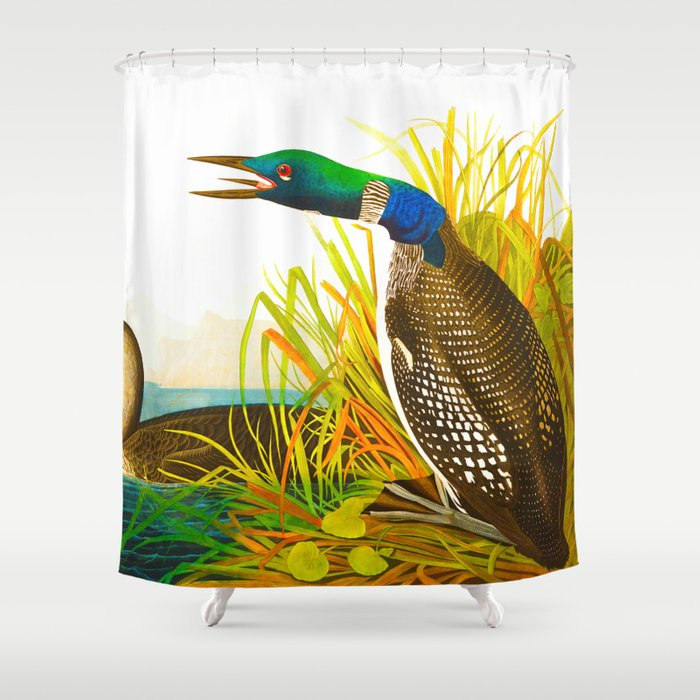 Great Northern Diver Or Loon Shower Curtain