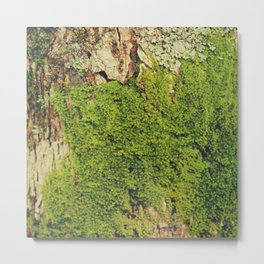 Moss Landscape I Metal Print