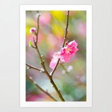 Plum Blossom On Spring Day Art Print