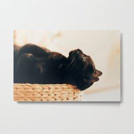 Pondering Cat Metal Print