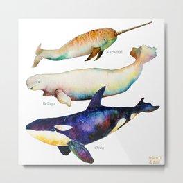 Best Buddies - Narwhal, Beluga & Orca Killer Whales Metal Print