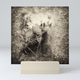 Beautiful thistle growing wild and sepia texture Mini Art Print