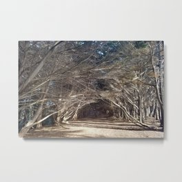 The Woods Hold Both the Light and the Darkness Metal Print