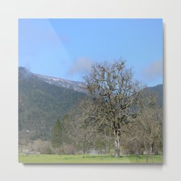 Spring in Trinity County, California Metal Print