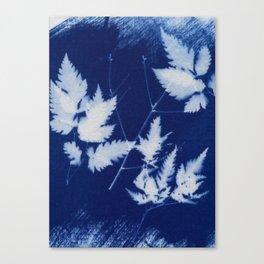 Cyanotype No. 2 Canvas Print