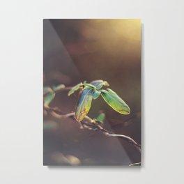 Holding On: A Winter Leaf Metal Print