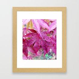 Red Maple Tree Framed Art Print