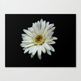 Simple White Flower Canvas Print