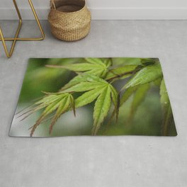 Japanese Maple in Green Rug