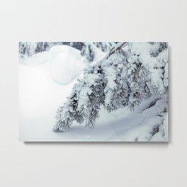 Winter's Pine 3 Metal Print