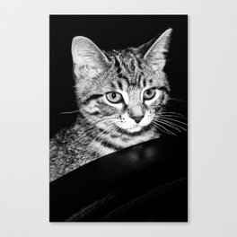 Time is what turns kittens into cats Canvas Print