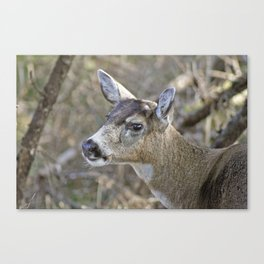 My Deer Friend Canvas Print