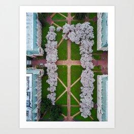 UW Cherry Blossoms: Spring Art Print