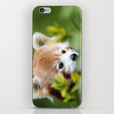 Red Panda 4 iPhone & iPod Skin