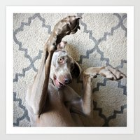 wrestling Art Prints featuring Weimaraner Wrestling by Cory Dean