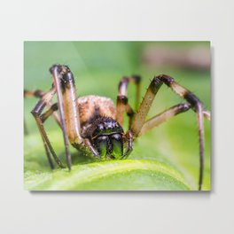 Super macro image of black and brown spider on green leaf. Wild insects. Close up nature spider. Metal Print