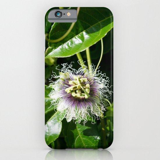 Passiflora edulis (Passion flower) iPhone & iPod Case