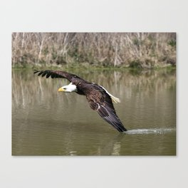 Wing Tip Canvas Print