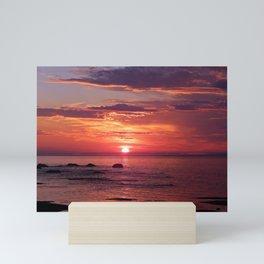The Flamboyant One Mini Art Print