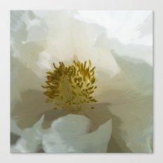 Paeonia White Grace2 Canvas Print