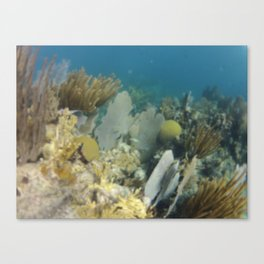 Coral, Under water, Virgin Islands, Caribbean, Sea scape Canvas Print