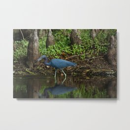 Little Blue Heron Reflection Metal Print