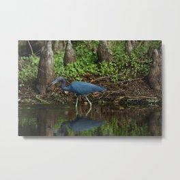 Little Blue Heron Reflection Metal Print