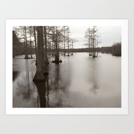 Cypress of the swamp Art Print