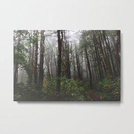 Forest Trail XXXIV Metal Print
