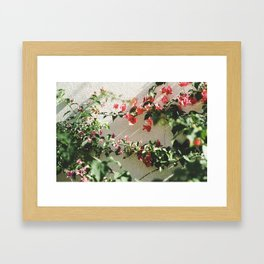 Pink & White. Framed Art Print