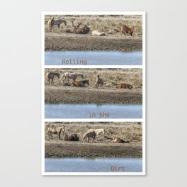 Rolling in the Dirt Canvas Print