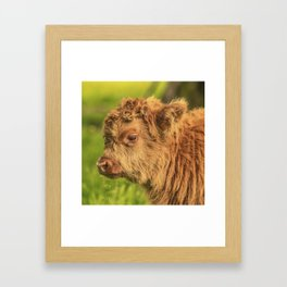 Highland Baby Framed Art Print