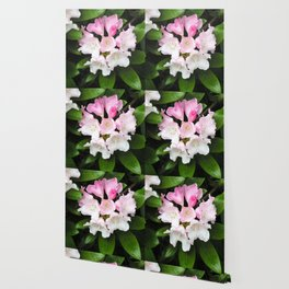 Pink Rhododendron in Spring Wallpaper