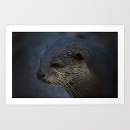 Small Clawed Otter Art Print