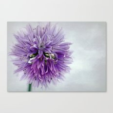chives bloom Canvas Print
