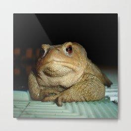 Common European Toad, Bufo Bufo Metal Print