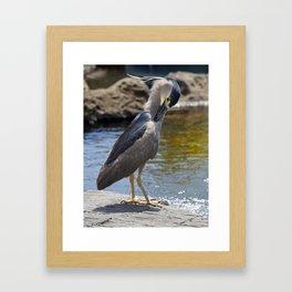Herron Framed Art Print