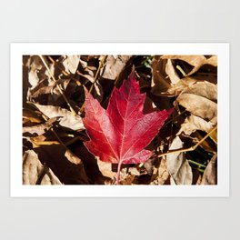 Maple Leaf Photography Print Art Print