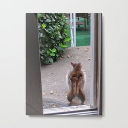 The Neighborhood Flasher Metal Print