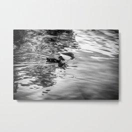 Swimming - Black & White Metal Print