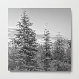 Mountains. Deep forest Metal Print