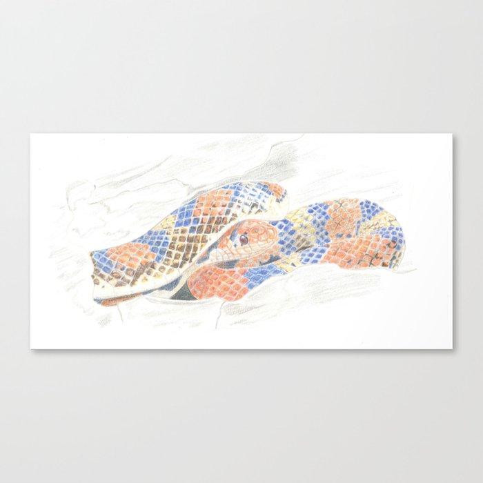 Colour Snake Canvas Print